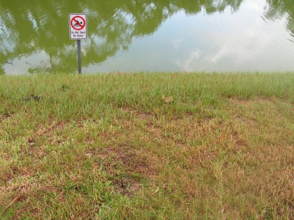 Retention Pond Stripped of Trees