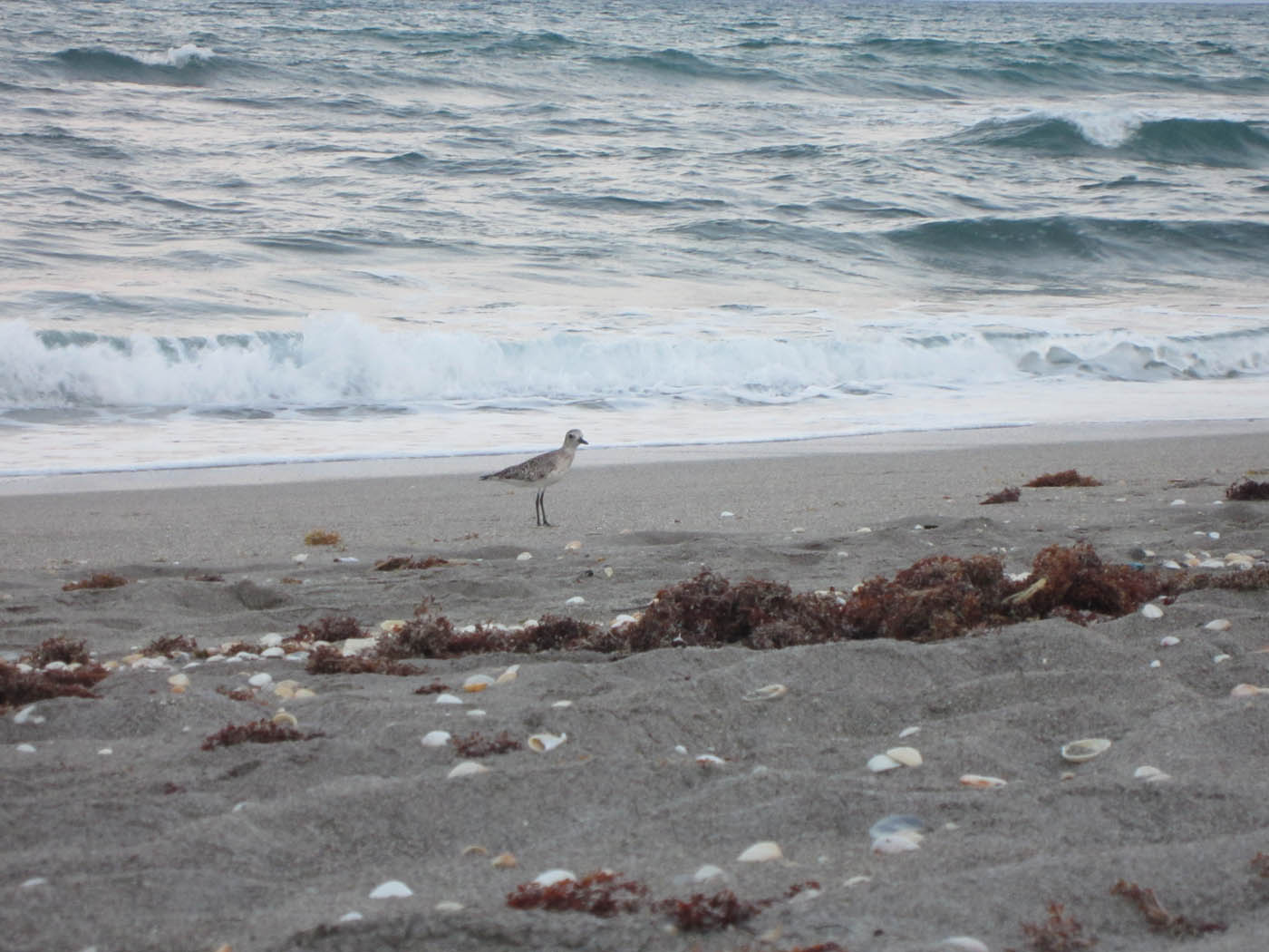 Birds Port Orange Volusia